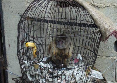 ¿Mascota o prisionero?